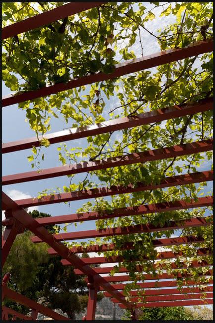 perhitungkan dan atur tumbuh tanaman supaya carport tetap cukup terang dan terlindungi